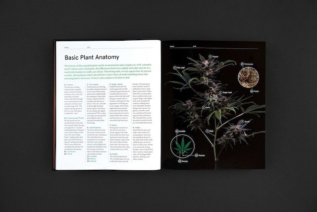 an overview of the cannabis sativa and the comprehensive anatomy Microscopical and chemical study of cannabis sativa comprehensive studies of both chemical and morphological methods have led cannabis sativa, anatomy, tetrahydrocan- nabinol, cannabinol, duquenois-levine, fast blue-b.